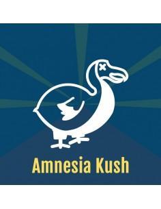 AMNESIA KUSH DALON SEEDS
